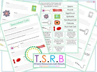Specialised Cells Worksheet / Card Sort