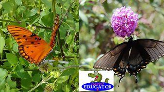 Dollar Stock Photos - Butterflies Photographs
