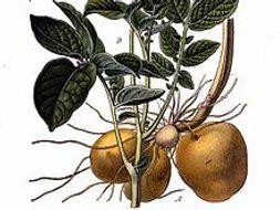 The Amazon Basin / Potatoes - 2 units about ecology - Intermediate