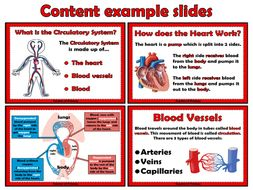The Circulatory System - PowerPoint presentation and worksheet