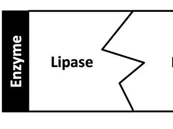 Digestive Enzymes Jigsaw Game