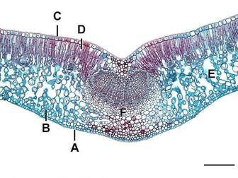 Eukaryote organelles