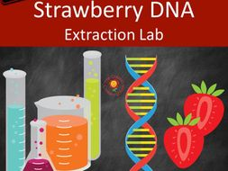 strawberry dna extraction lab us version