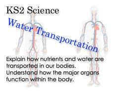 Science ks 2 water transportation around the body