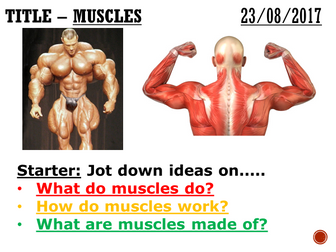 Muscles - complete lesson (KS3)