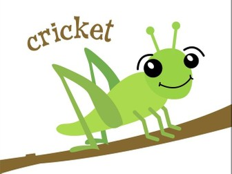 What is a Cricket?