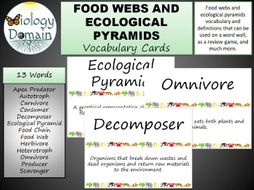 Food Web Word Wall Vocabulary Cards