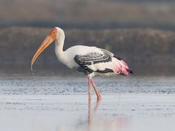 Ecotourism in Spain: stork migration (1), Ordesa Park (2) - thematic units - SP Intermediate 1