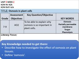 why is osmosis important to plants