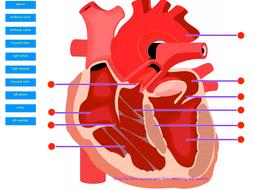 Anatomy Interactive