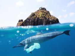 Plastic debate - Persuasive writing and Science investigation