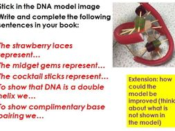 Genes, chromosomes, DNA, (including the structure and discovery of DNA)