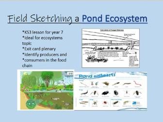 Free Pond Ecosystem lesson