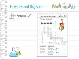 Enzymes and digestion - Crossword puzzle (KS3/KS4)
