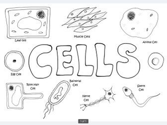 B1 AQA 2016 Cell Biology resource bundle by mwyre
