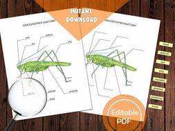 GRASSHOPPER ANATOMY / Editable Watercolor / Homeschool Printable / Education