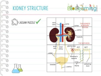 The Kidneys - Jigsaw Puzzle (KS4)