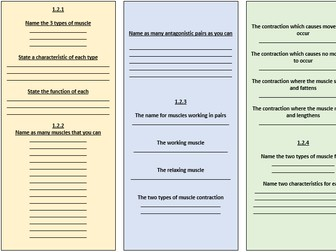 GCSE PE Revision: Muscular System