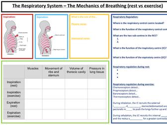 A-Level PE: Respiratory Syst. Summary Sheet