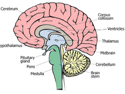 THE HUMAN ENDOCRINE SYSTEM AND HORMONES