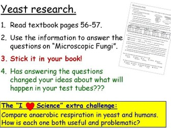 Microscopic Fungi (Yeast) Year 8 Lesson PowerPoint (KS3 8Db) Unicellular Organisms topic