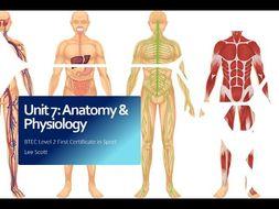 Unit 7 - Anatomy & physiology (BTEC Level 2 Sport)