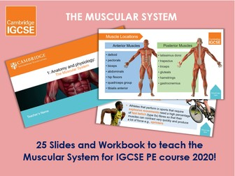 Muscular System - IGCSE Physical Education Ppt & Workbook
