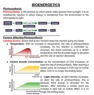 BIOENERGETICS.docx