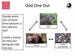 Otter themed numeracy and literacy activities