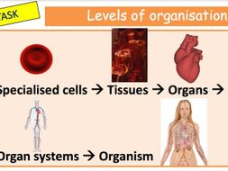 Organisation & specialisation of cells