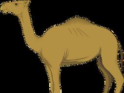 Montessoir Nomenclature Cards: Parts of an Arabian Camel