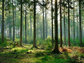 Topic 8 Forests Under Threat - Sustainable Forestry & Conflicting Views in the Taiga
