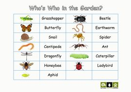 NSL-cut-out-minibeasts-and-identification-table.pdf