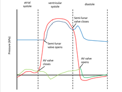Cardiac cycle (AQA A-level Biology)