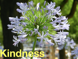 Kindness: Primary Mindfulness and Wellbeing through real stories.