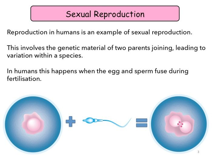Sexual reproduction in humans gcse
