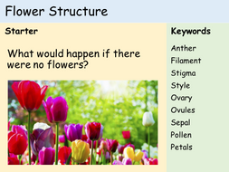 KS3 Plants - Lesson 2 - Structure of a Flower (and dissection)