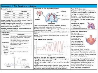 GCSE PE – Edexcel (9-1) – Respiratory System - Knowledge Organiser/Revision Mat