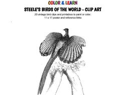 COLOR & LEARN: Steele's Birds of the World - Clip Art