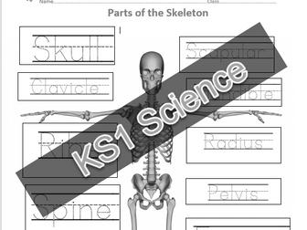 KS1 Science Activity Bundle by VirtuallyQatarted