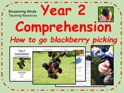 Year 2 non-fiction comprehension - How to go blackberry picking