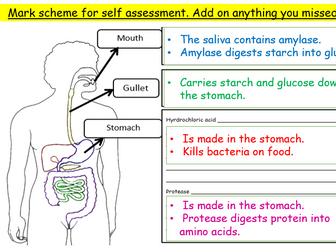 Summary of digestion task