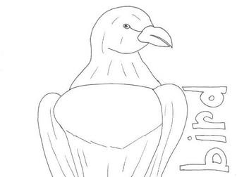 Bird: Animals and Pets