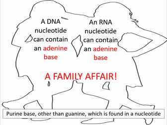 Structure of RNA (AQA A-level Biology)