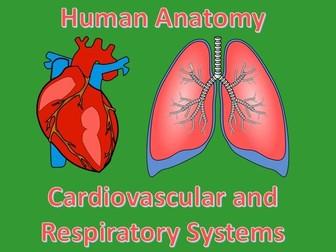 Human Anatomy Quiz: Cardiovascular and Respiratory Systems