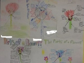 The Flowering Plant parts poster activity with rubric