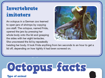 Weird and Wonderful Octopuses Comprehension KS2