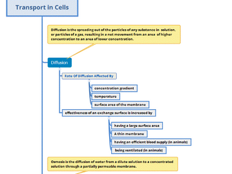 Transport in Cells