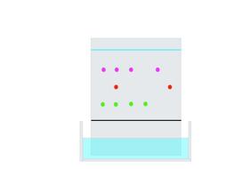 Paper chromatography animation