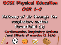 GCSE OCR PE (1.1d/e) - Pathway of air through the respiratory system PowerPoint